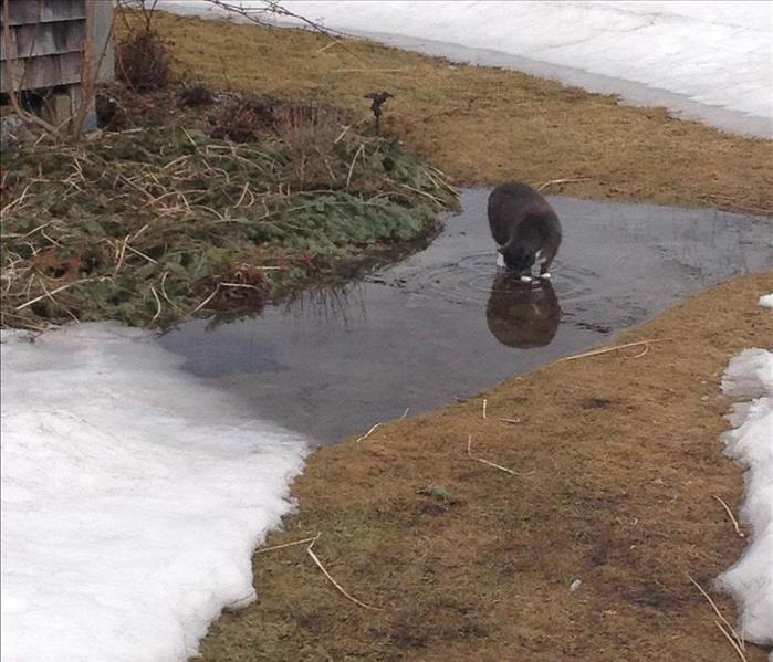 Snow on the grass and some snow that has started to melt in puddles.A grey cat is drinking from the puddles.