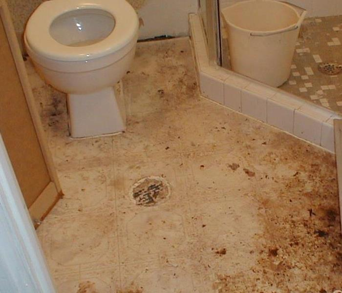 Toliet with sewage backup in a bathroom.